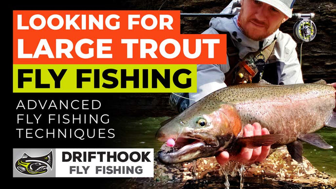 Looking for Large Trout Fly Fishing [VIDEO]