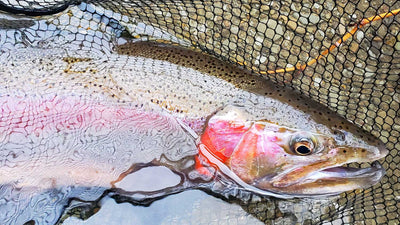 How to Fly Fish a Sculpin Pattern