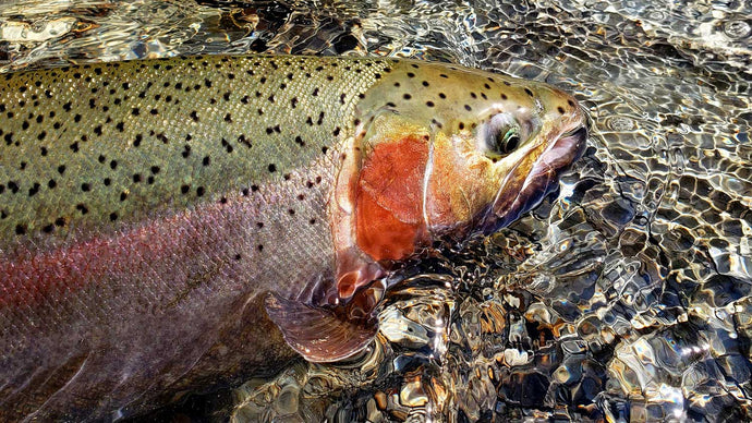Sight Fishing for Trout - The Beginner's Guide