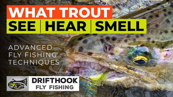 What Trout See, Hear and Smell - Advanced Fly Fishing Tips