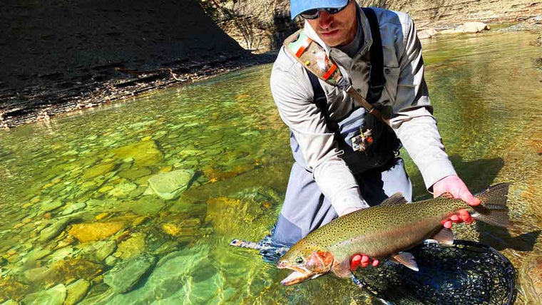 Man Catching Large Trout in April