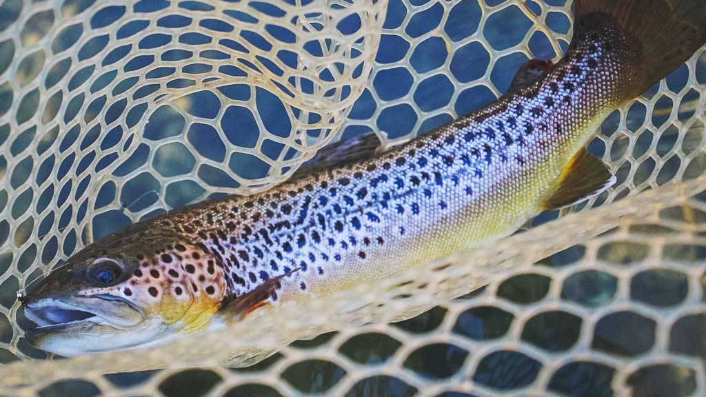 15 Best Trout Flies for May