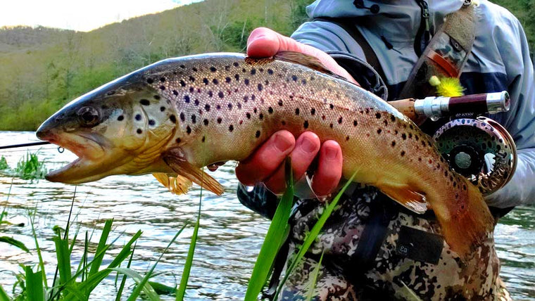 Large Brown Trout - Caught with Drifthook Fly Fishing Flies
