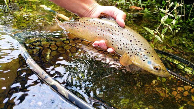 Best Time of the Year - Day, Month, Time to Fly Fish