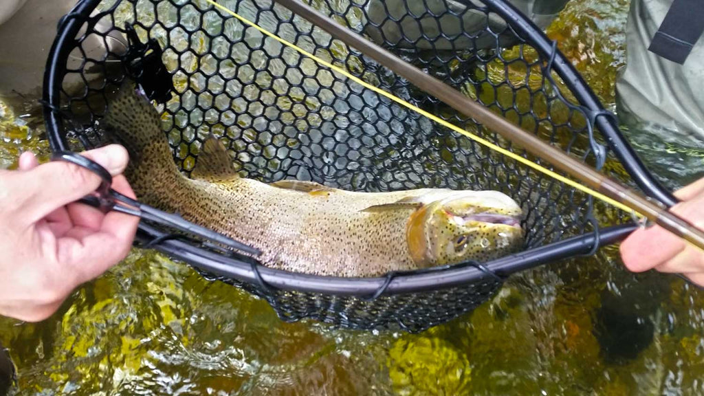 Large Rainbow Trout - on the dirfthook fly fishing system