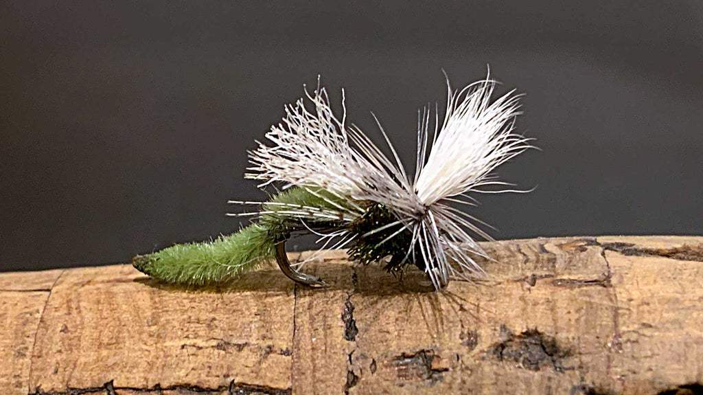 Spotlight Caddis Emerger