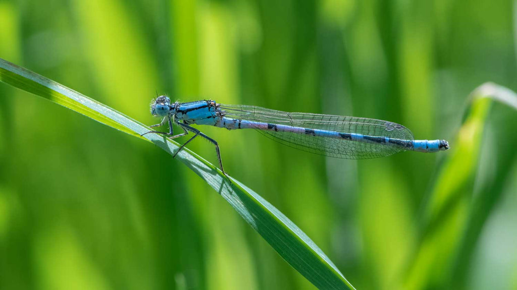 Damselfly on lake side