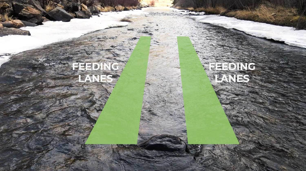Feeding Lanes for Trout