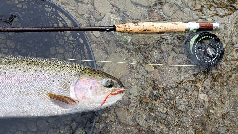 Trout and Fly Line