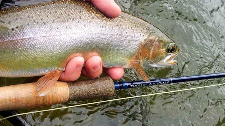 Fly Rod for Streamers