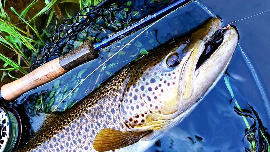 Large Brown Caught with Streamer from Drifthook Fly Fishing