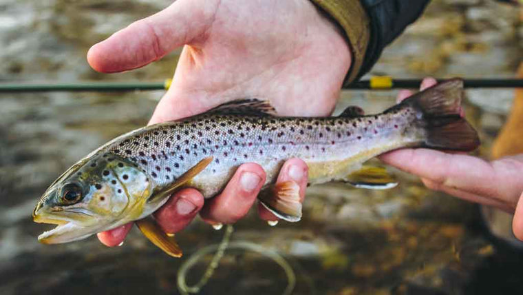 Top 15 Trout Flies for September