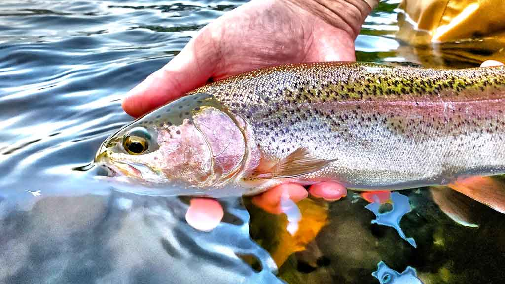 What do I Need to Start Fly Fishing?