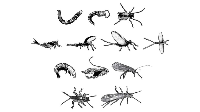 Stages of Flies for Fly Fishing