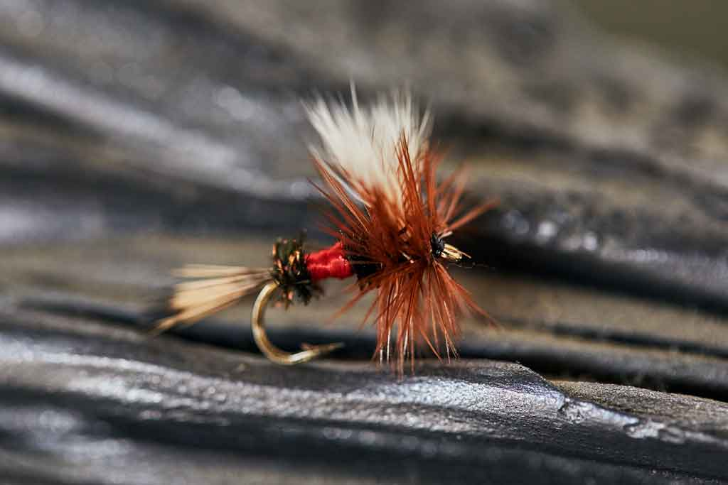 Dry Fly Fishing - Large Royal Wulff