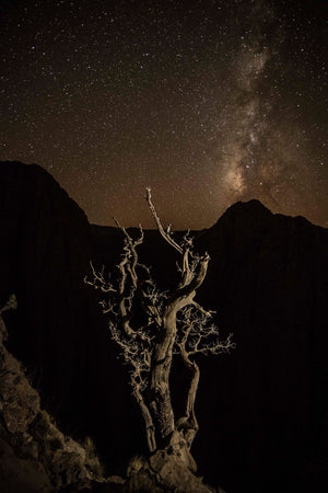 Tree under the stars, Morocco
