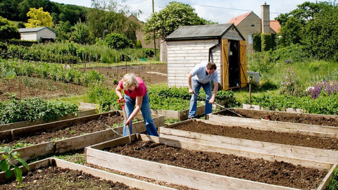 two people gardening at their allotment.