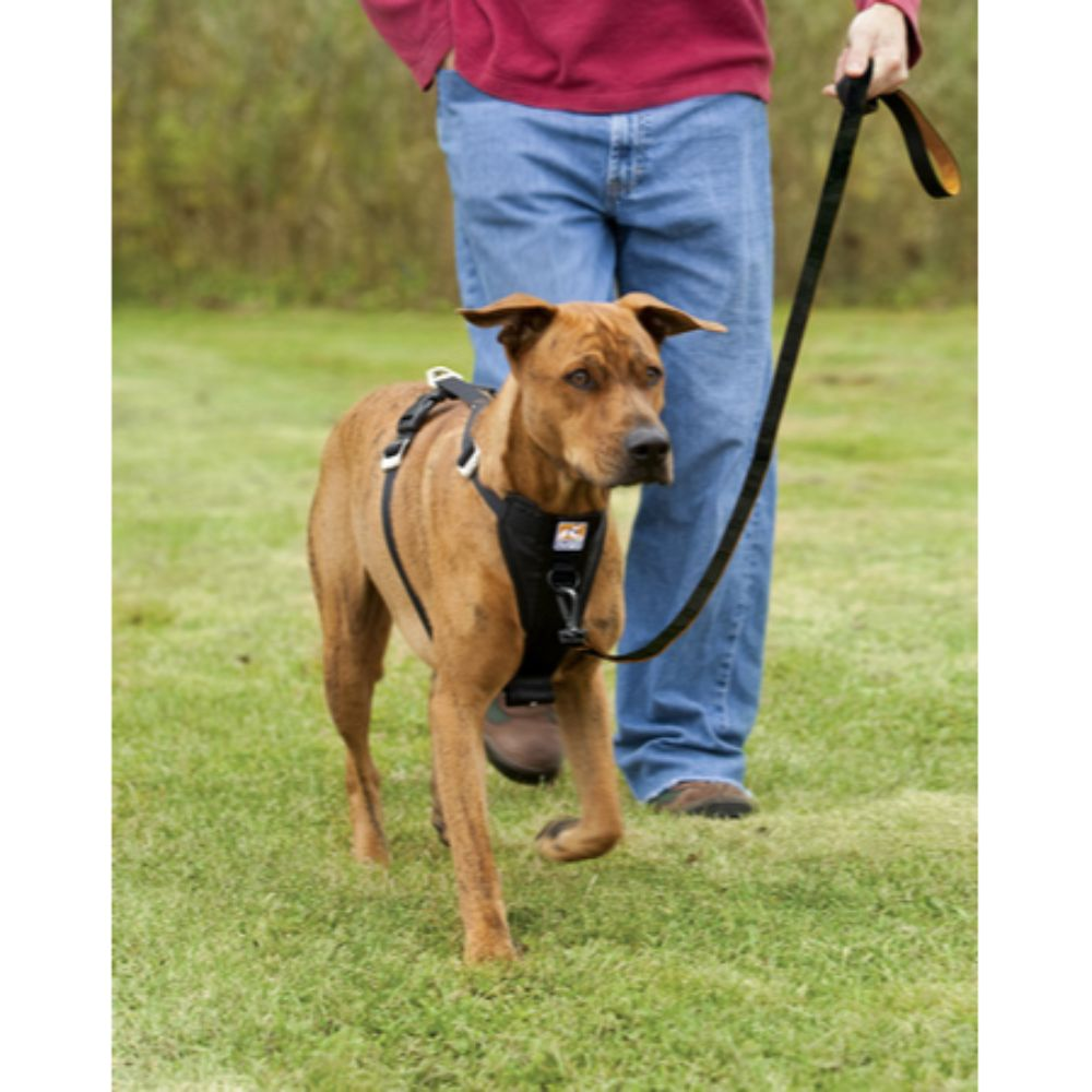 Kurgo Tru-Fit Smart Harness - Quick Release w/seatbelt loop