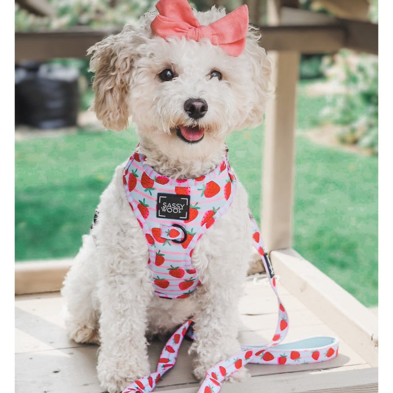Sassy Woof ADJUSTABLE HARNESS - I WOOF YOU BERRY MUCH