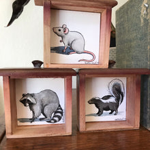 Load image into Gallery viewer, SALE Set of 3 Woodland Animals Box Paintings - Gray Mouse, Skunk & Raccoon