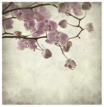 Load image into Gallery viewer, cherry blossom square card