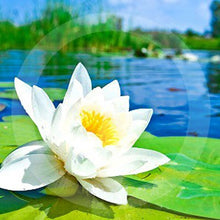 Load image into Gallery viewer, Waterlily Room Sprays