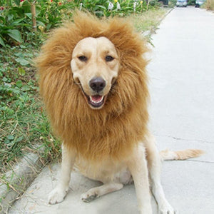 Pet Costume ( Lion Mane Wig ) For Dogs Festival Dress Up