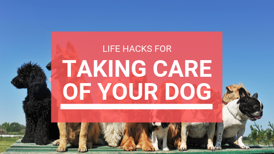 Life Hacks for Dogs