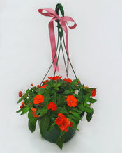 Load image into Gallery viewer, Hanging Basket