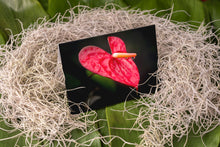 Load image into Gallery viewer, Notecard – Heart Anthurium