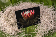 Load image into Gallery viewer, Notecard – King Protea