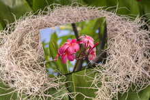 Load image into Gallery viewer, Notecard – Pink Bunch