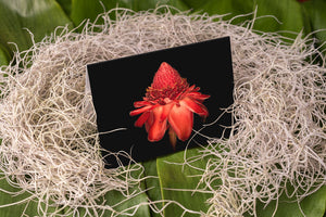 Notecard – Torch Ginger