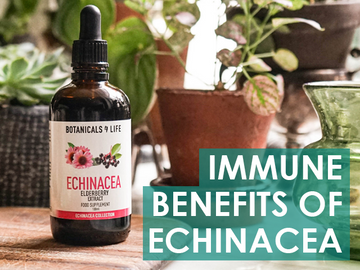 3 impressive benefits of echinacea