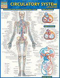 Circulatory System Advanced (Quick Study Academic)
