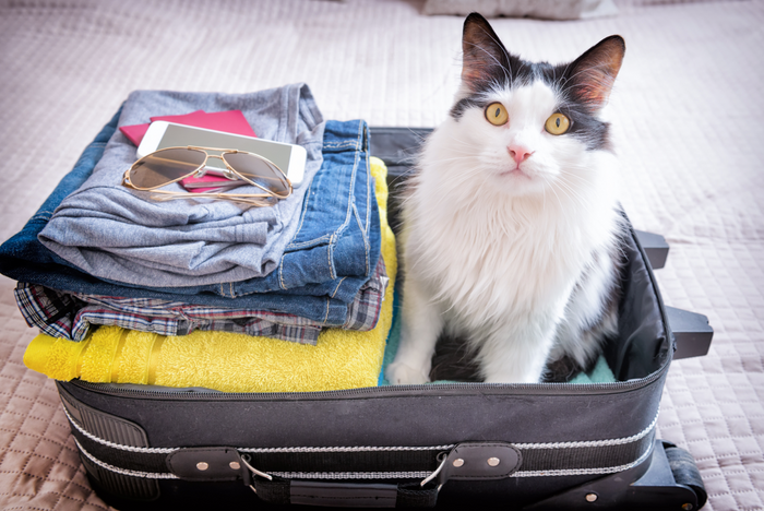 A Complete Guide to Traveling With Your Pet