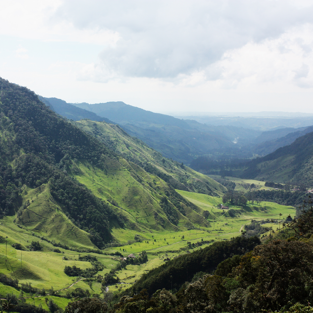THE FASCINATING STORY OF COLOMBIAN COFFEE