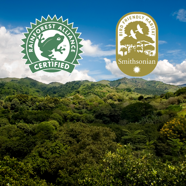 What is Bird Friendly and Rainforest Alliance Certified Coffee?