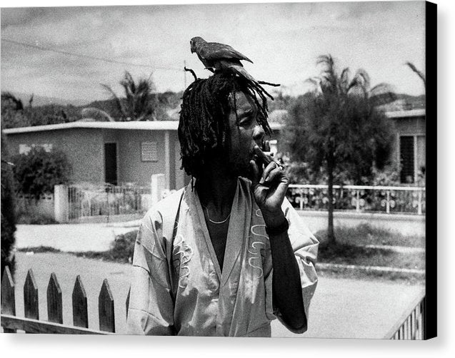Peter Tosh Burning A Spliff In His Front Yard With His Parrot Freddie - Canvas Print