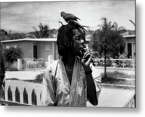 Peter Tosh Burning A Spliff In His Front Yard With His Parrot Freddie - Metal Print