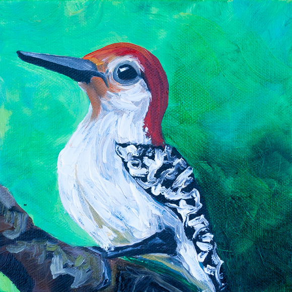Red Bellied Woodpecker 6x6 Original Painting