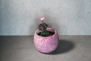 Medium Succulent Pot - Dusty Pink