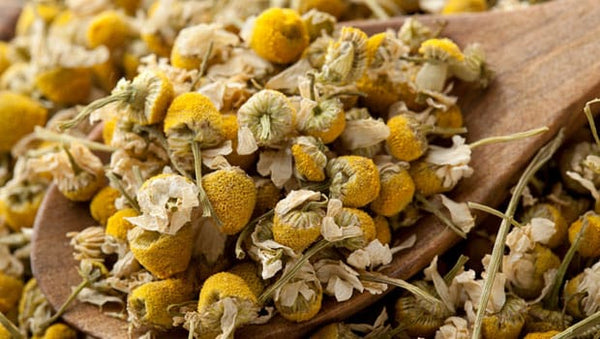 An ancient herb: Chamomile