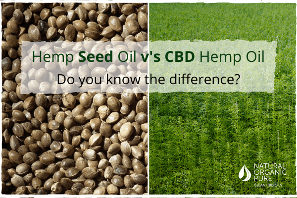 Hemp Seed Oil v's CBD Hemp Oil