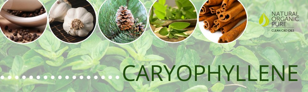 caryophylliene-what are terpenes-nopcoils