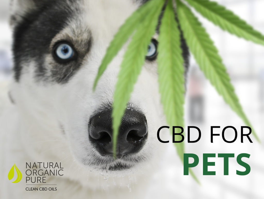 CBD for Pets-can I use cbd oil on my pets-customer questions-nopc oils