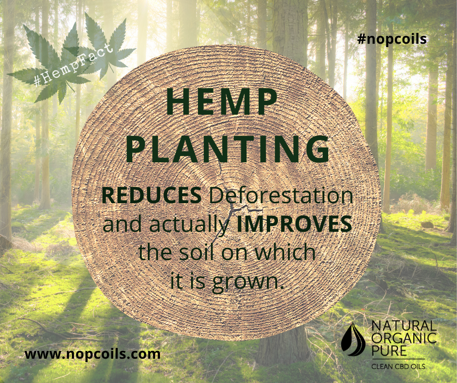 hemp planting can stop deforestation-nopc loils blog