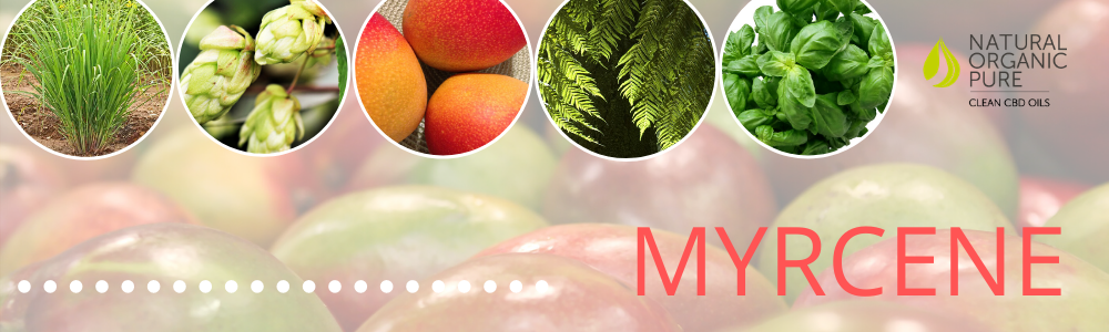 Myrcene-what are terpenes-nopc oils blog