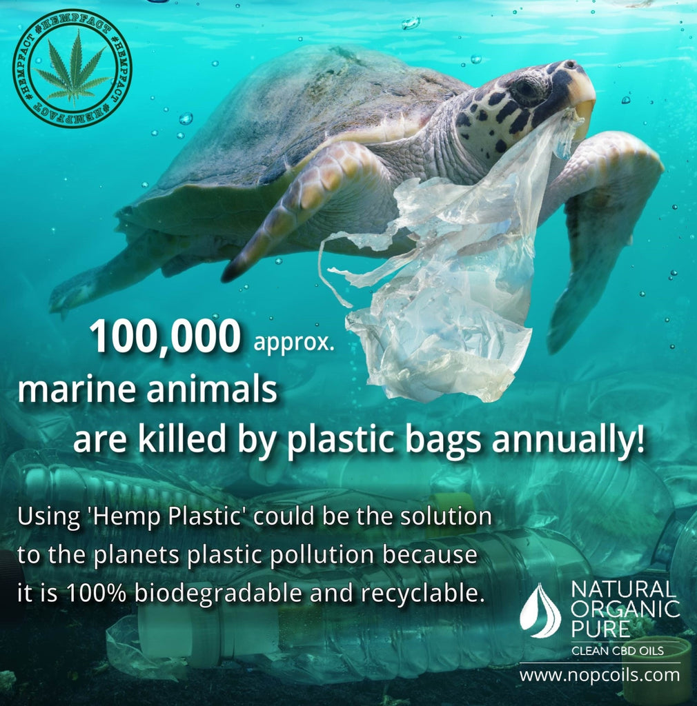 marine animals are being killed daily by plastic litter-hemp plastic can stop this-nopcoils
