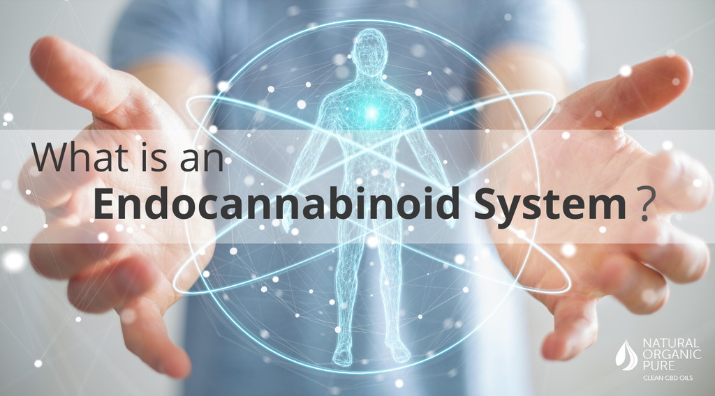 cbd supports the endocannabinoid system (ecs)-nopc oils